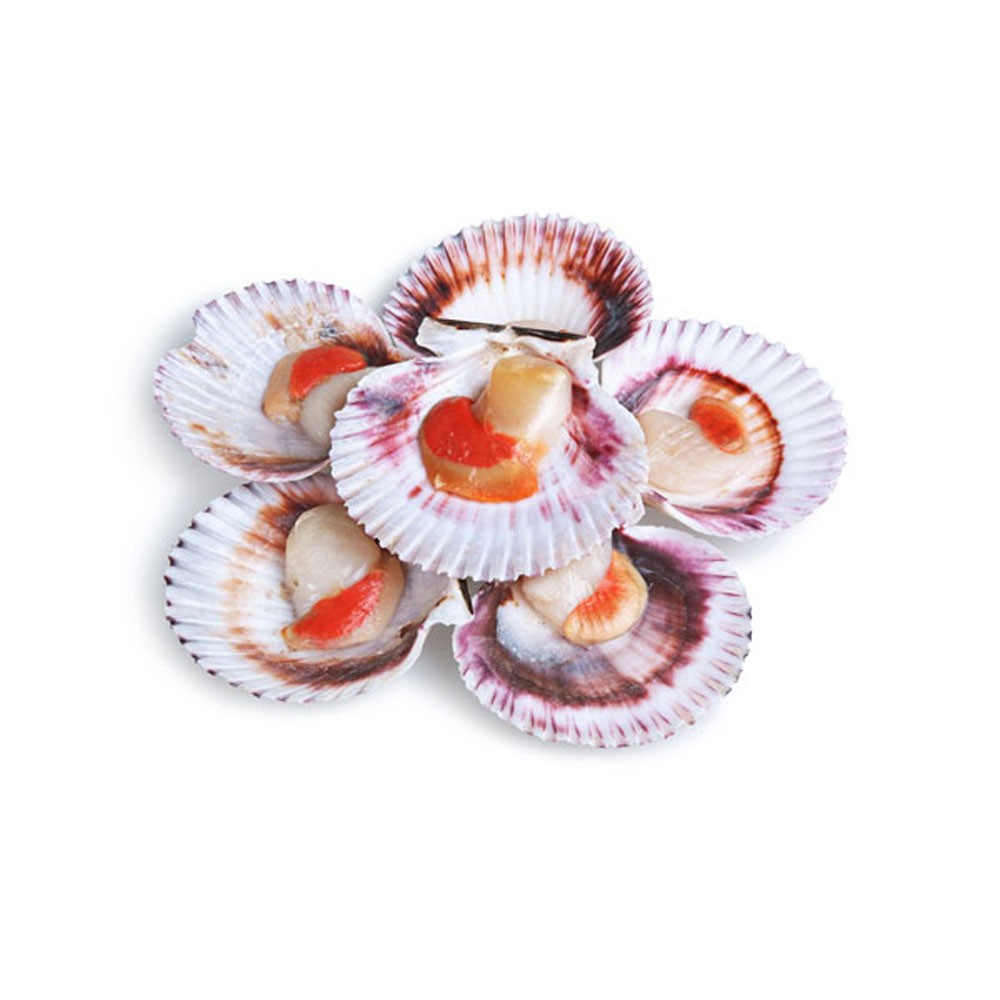 Half Shell Scallops