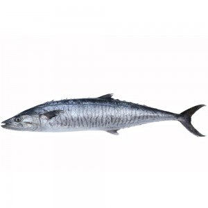 Spanish Mackrel